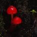 West Coast New Zealand colourful fungi