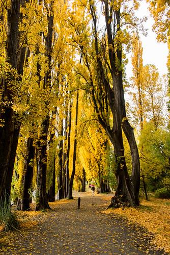 autumn trees newzealand sky people umbrella southisland centralotago raining wanaka pathway triptoanzacblipmeet