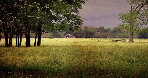 rural landscape textures topaz