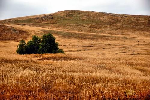 california morning field digital photo spring hill meadow irvine