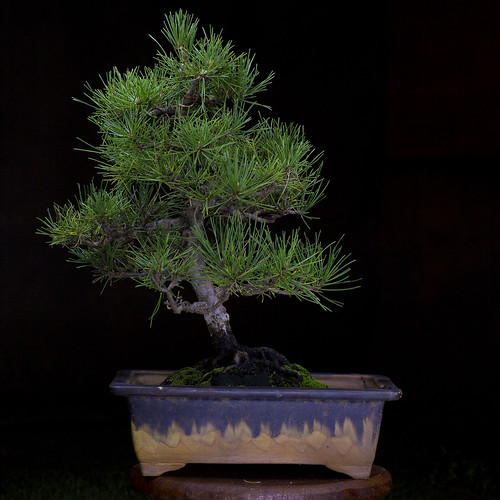 Bonsai | by ttt_1978
