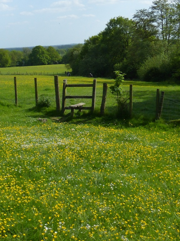 Buttercup stile near Pluckley Sutton Valence to Pluckley walk