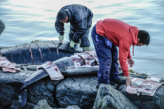 My_1st_impressions_Greenland whale hunting-13 | by My 1st impressions
