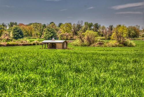 2015 spring field geese coltsneck nj og hdr 365the2015edition 3652015 day125365 day125 5may15