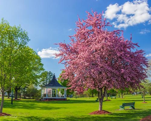 Bandstand Park Spring | by Tim_NEK