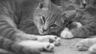 trailer-park-kitten | by jessawynn