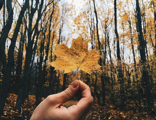 autumn fall leaves yellow forest dark gold leaf woods bokeh