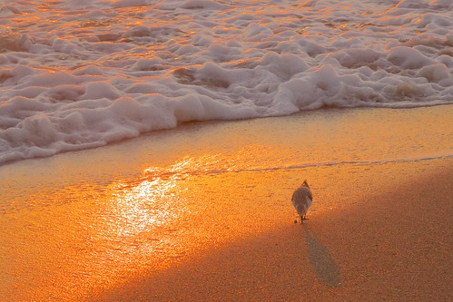 beach sunrise dawn surf florida sandpiper indialantic