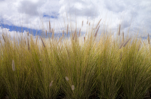 Grasses on the rooftop of The Amparo Museum, Puebla, Mexico.