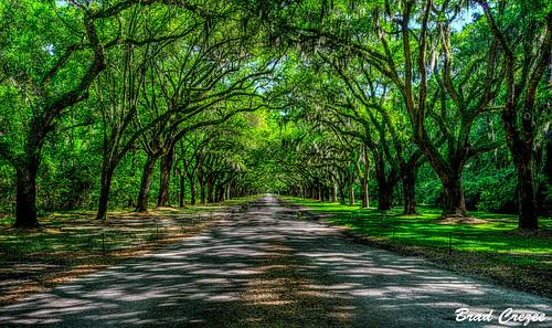 wormsloe georgia savannah oak trees road green nikon d800 2485mm hdr popularphotography bradcrezee