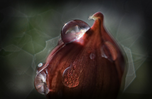 onion dome