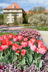 Tulips in bloom at the Botanic Garden in Munich, Germany by transitpeople