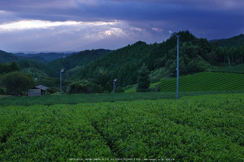 山添村,お茶畑(K70_1109G,28 mm,F8,iso100)2016yaotomi