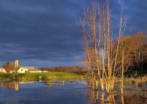 trees reflections pond stream michigan farm darkclouds presunset kentcounty brghtsky
