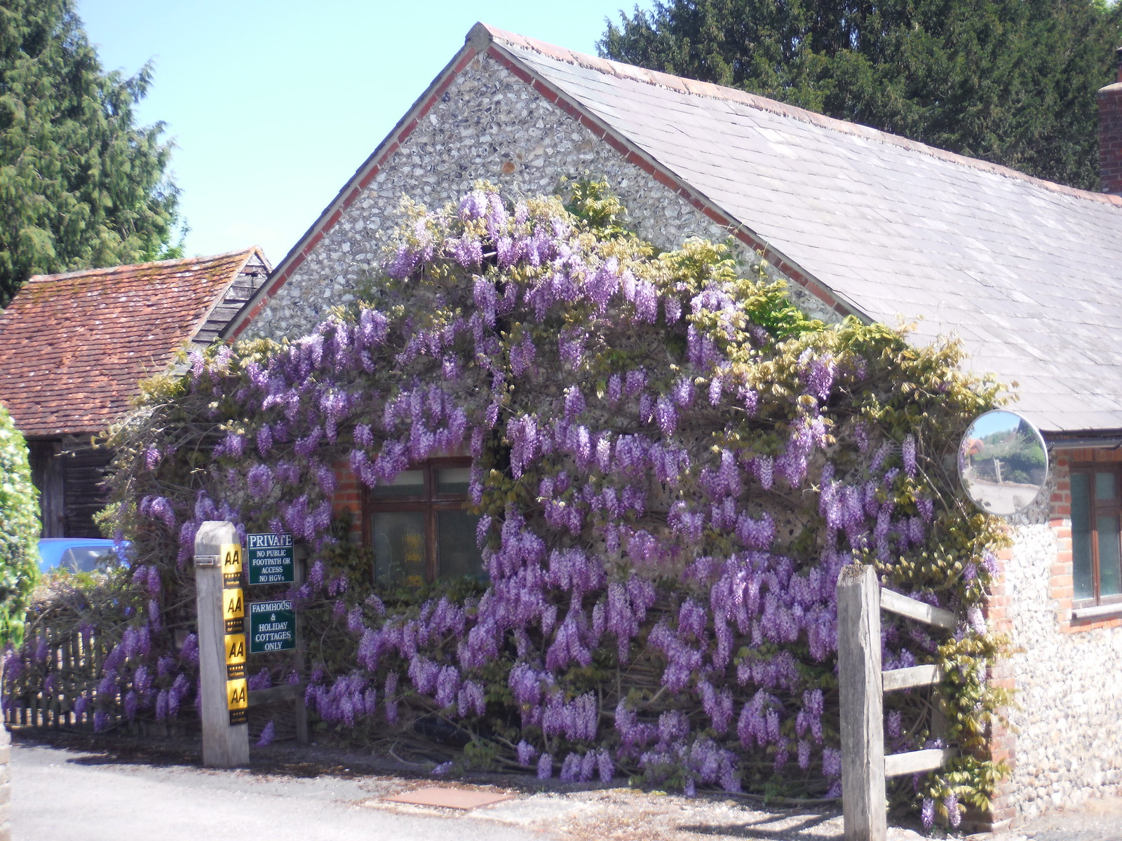 Wisteria-infested Cottage, West Marden SWC Walk Rowlands Castle Circular