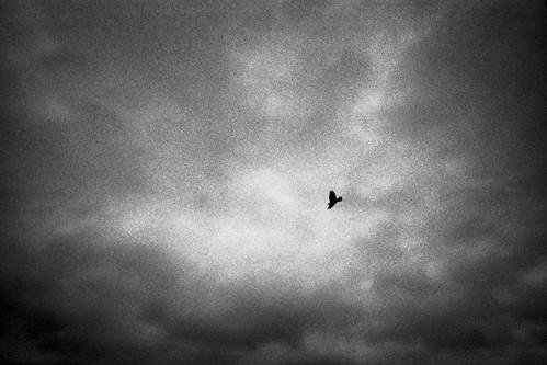 Bird in stormy sky 1998   by shahidul001