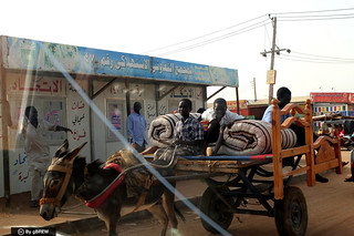 Peering into each other (Donkey transport in Khartoum, Sudan)