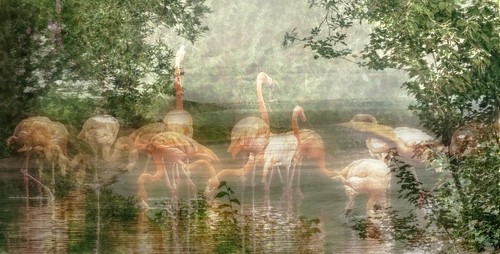 ~ Flamingo Flamenco ~   by Orchids love rainwater