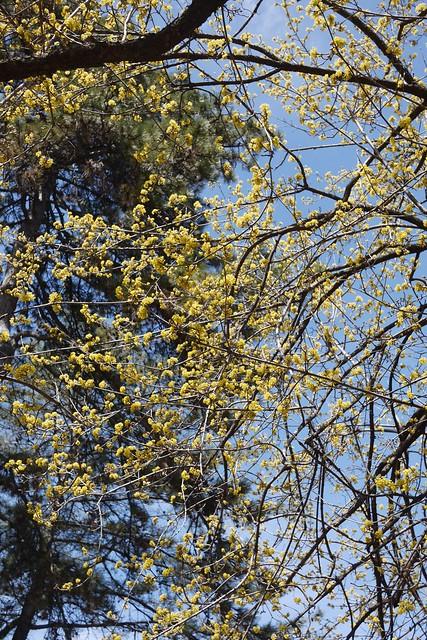 木, 2015-04-16 12:46 - Brooklyn Botanic Garden