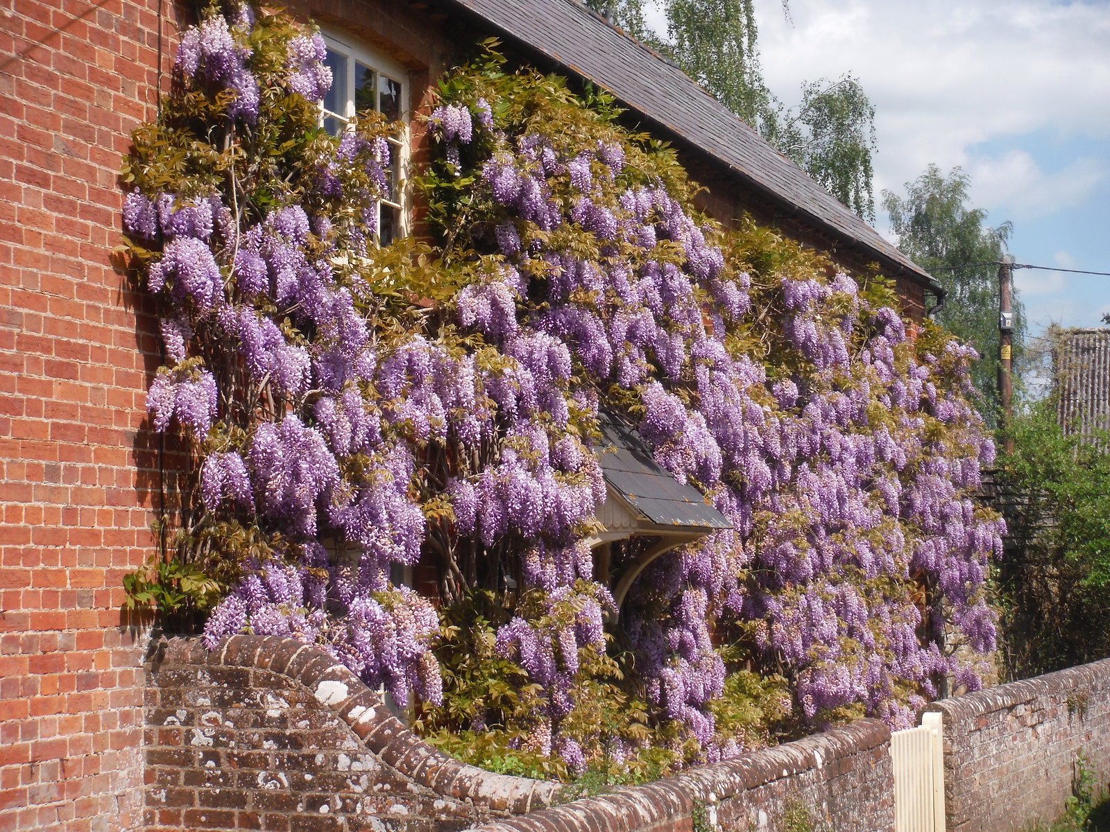 Wisteria-infested House, Waterstock SWC Walk 190 - Thame Circular (Extension)