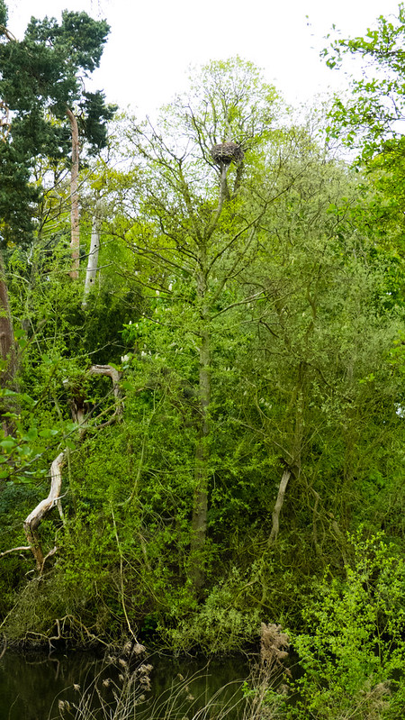 Pendeford Mill Open Day, May 2015, Heron's nest