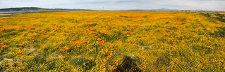 Field of wildflowers   by amitp