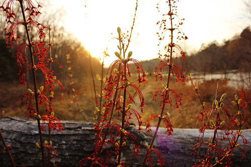 sunset sun plant nature river fire photography virginia petersburg will va appomattox