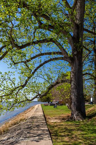 virginia jamescitycounty jamestown parks nationalparks colonialnationalhistoricalpark majestictrees leavesopening spring riversandstreams jamesriver april2015 april 2015 canon24704l