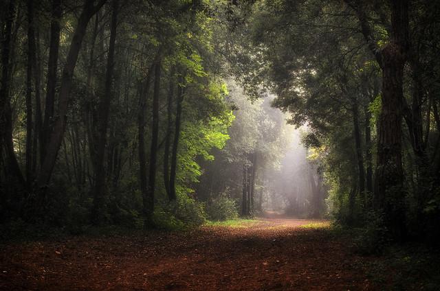 magia nel bosco reloaded.....