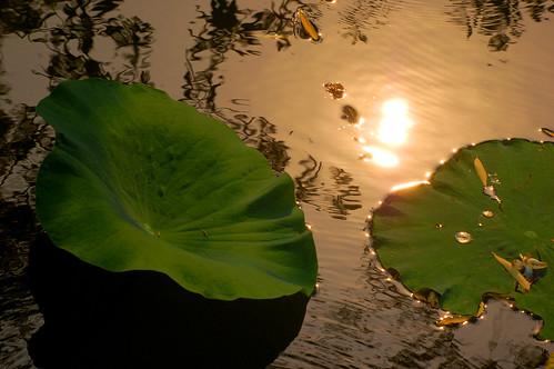 china sunset june pond suzhou 2009 humbleadministratorsgarden
