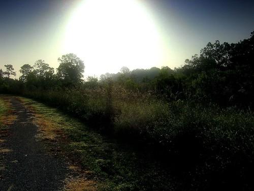 morning nature manipulated sunrise landscape ilovenature spring haze louisiana batonrouge backlit thesouth naturetrail mrgreenjeans gaylon blackwaterconservationarea gaylonkeeling