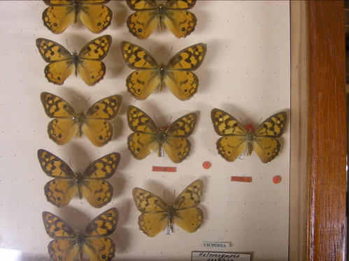 Type Species - Behind the sceans in the Entimology department - Museum of Australia | by Charlie Brewer