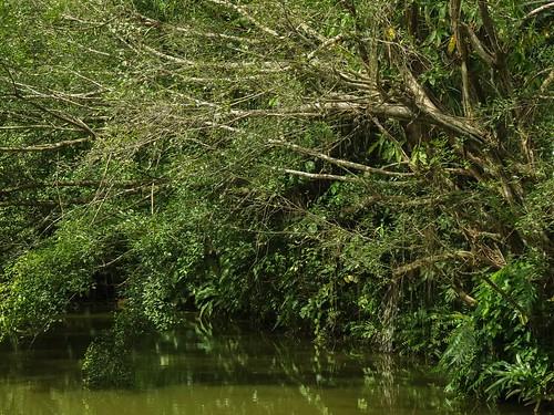 landscape trees pond leaves jurongecogarden birdhabitat singapore nature