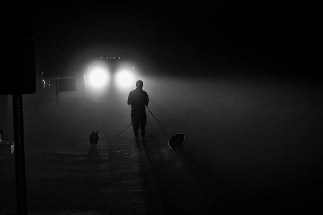 The dog walker incident