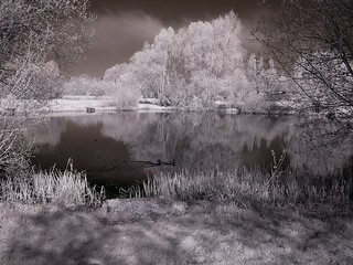 Islip fishing lake (Infra red) | by Analyst 1