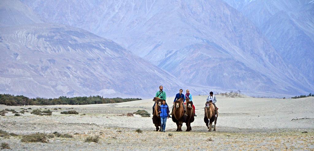 Camel Ride Cold Desert Of Hunder Nubra Valley Ladakh Flickr