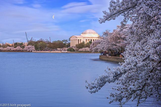 Jefferson Memorial Full Bloom