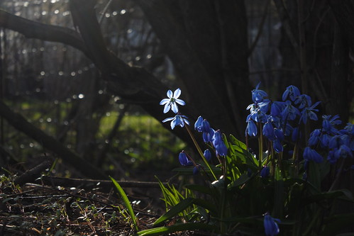 Flowers of shadow | by Henry Söderlund
