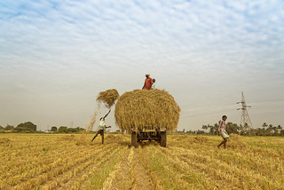 Farms and Farmers | by Well-Bred Kannan (WBK Photography)