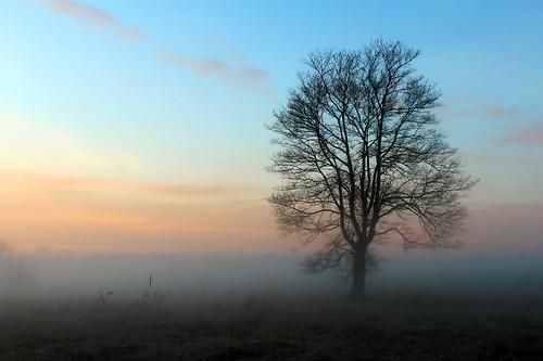 tree fog rural landscape pennsylvania pa adamscounty