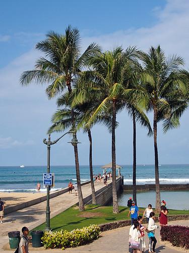 Honolulu -Joe 3   by KathyCat102