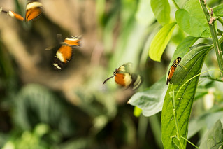 Wisley Butterfly House | by MattWPBS
