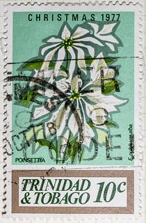 Poinsettia Christmas 1977 10 cents