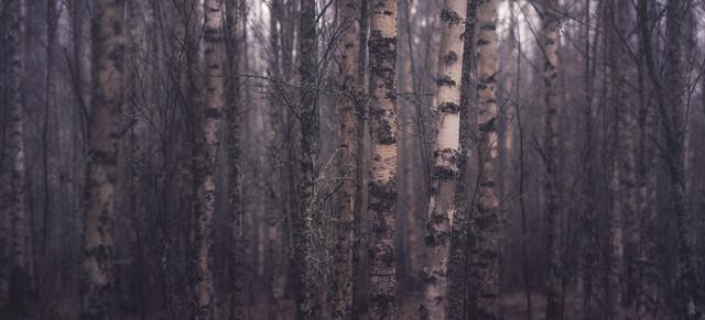 birchwood whisper