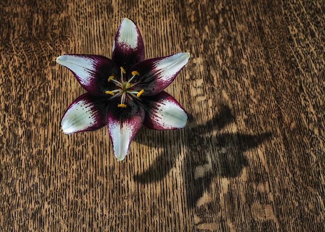 Flower, Wood & Shadow