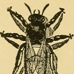 "Image from page 148 of ""American bee journal"" (1861)"
