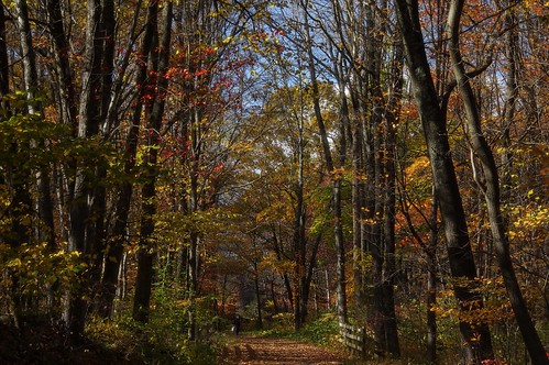 pentax k3 vbd smcpentaxda55300mmf458ed ct connecticut fall fallcolor autumn trees newengland woods oldminepark 2014 fall2015 trumbull park landscape forest foliage
