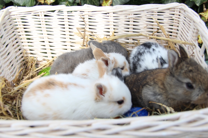 Our baby rabbits