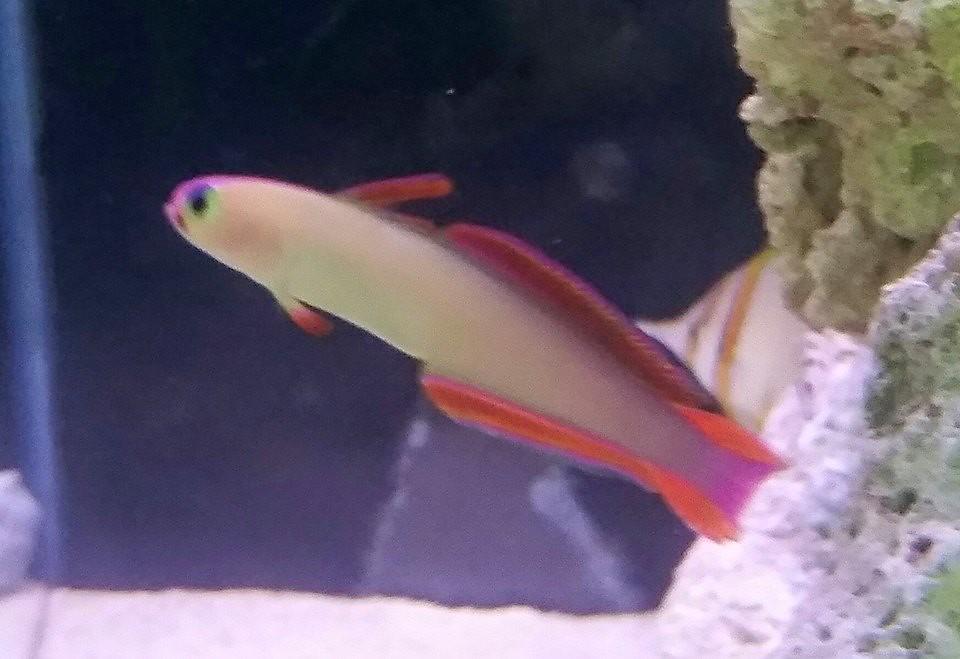golfdfish shop perth, aquarium specialist store, fish aqua…   Flickr