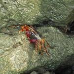 Fr, 17.04.15 - 15:30 - Noch eine Krabbe
